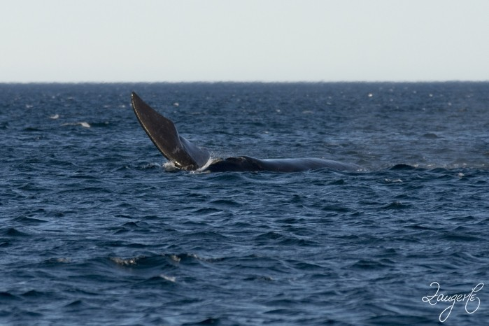 Puerto Madryn - Whales 01