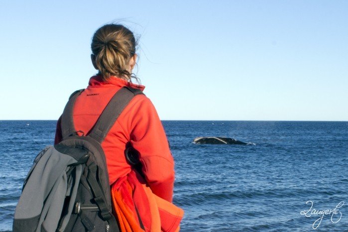 Puerto Madryn - Whales 08